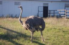 Парк птиц «Воробьи». Оптина Пустынь, Шамордино, Козельск