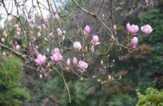 Отдых в Сочи в марте: недорого и увлекательно