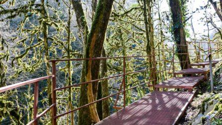 Тисо-самшитовая роща в Хосте — прогулка по уникальному лесу
