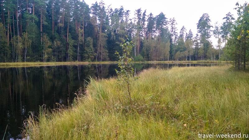 озеро моховое щелковский